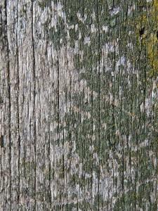 Hout behandelen, hout impregneren, hout waterdicht maken, hout beschermen, alg voorkomen