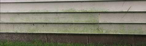 houten gevel impregneren, houten gevel schimmel, houten gevel algen, houten gevel waterafstotend, houten gevel beschermen, houten gevel impegneren